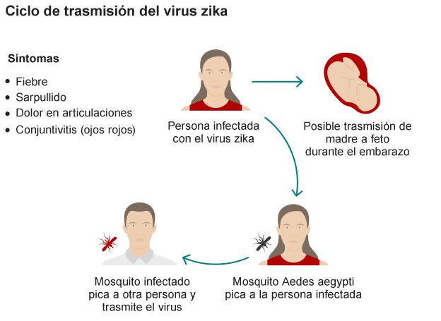 160126132204_zika_virus_cycle_624-08_spanishversion3